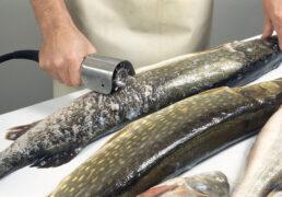 Kalade rookimise masin